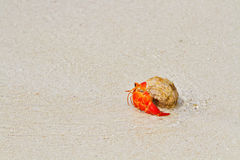 Hermit crab walking toward the sea Royalty Free Stock Photo