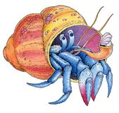 Hermit crab watercolor painted hand drawing Stock Photo