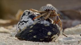 Hermit crab on white sand beach holiday in Maldives background stock footage