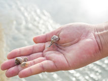 Hermit Crab on woman hand Royalty Free Stock Image