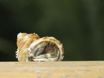Hermit crab on wood Royalty Free Stock Photo
