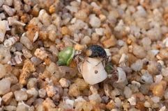 Hermit crabs Stock Image