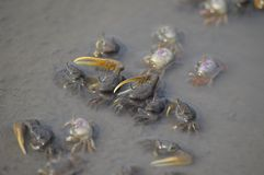Hermit Crabs in a Tide Pool royalty free stock photography