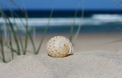 Hermit crabs home. A beautiful crabs shell/home on a sand dune, with the ocean and beautiful blue sky in the background royalty free stock images