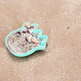 Hermit crabs lies in a child's toy Royalty Free Stock Photo
