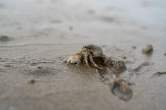 Hermit crabs live on the sand at the sea ,It digging sand to bury themselves to hide from predators. Hermit crabs live on the sand at the sea royalty free stock photo