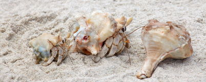 Hermit Crabs On A Beach Stock Photo