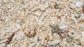 A Hermit Life. Hermit crabs crawling around in the rough sand texture on Mystery Island, Vanuatu Royalty Free Stock Photos