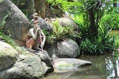 Free Hermit Statue Stock Photo - 14410210