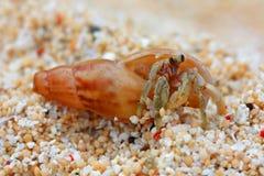 hermite de 3 crabes Photographie stock libre de droits