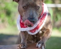 Hermoine the Shelter Dog royalty free stock photos