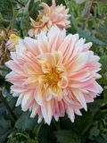 Hermosa Flor Fotografia Royalty Free