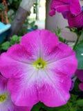 Hermosa flor. Rosita flor mucho amor stock image