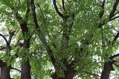 Hermosa-planta en-primavera Betrüger Luz de sol Baum mit Sonnenlicht stockbilder