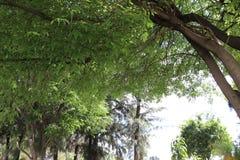 Hermosa-planta en-primavera Betrüger Luz de sol Baum mit Sonnenlicht stockfoto