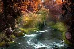 Hermosa vista con la cascada en el bosque Foto de archivo libre de regalías