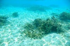 Hermosa vista de arrecifes de coral muertos Mundo subacuático El bucear en el Océano Índico Imagenes de archivo