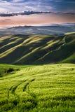 Hermosa vista de campos y de prados verdes en la puesta del sol en Toscana Fotos de archivo