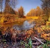 hermosa vista de la última fauna del otoño Imagen de archivo libre de regalías