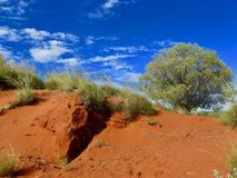 Hermosa vista de la arena, de árboles y de la vegetación rojos en el interior de Australia Foto de archivo