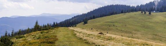 Hermosa vista de la carretera nacional polvorienta vacía en la cuesta de las montañas cárpatas, cubierta denso con el bosque, Ucr Imagenes de archivo
