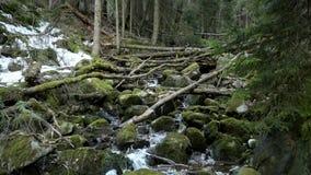 Hermosa vista de la corriente dentro del bosque del pino almacen de video