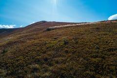 Hermosa vista de las montañas cárpatas en verano Fotos de archivo libres de regalías