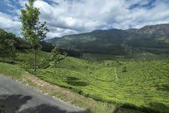 Hermosa vista de las plantaciones de té Imagen de archivo libre de regalías