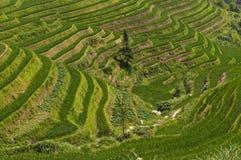 Hermosa vista de las terrazas del arroz de Longsheng cerca del del pueblo de Dazhai en la provincia de Guangxi, en China imagenes de archivo