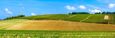 Hermosa vista de los campos, de los prados y de los arbustos con el cielo azul imagen de archivo