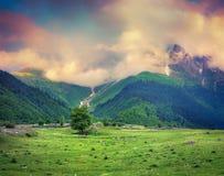 Hermosa vista de prados alpinos en la salida del sol de niebla imagen de archivo