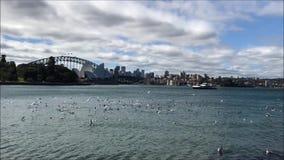 Hermosa vista de Sydney Opera House y del puente del puerto almacen de metraje de vídeo
