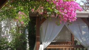 Hermosa vista de un árbol floreciente y de una tienda con las cortinas blancas en la playa, jardín en el hotel almacen de metraje de vídeo