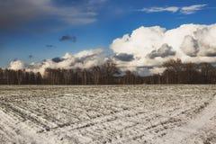 Hermosa vista de un campo nevado con la hierba amarilla contra un fondo del bosque del otoño, cielo azul con las nubes blancas Foto de archivo libre de regalías