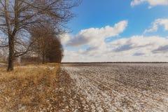 Hermosa vista de un campo nevado con la hierba amarilla contra un fondo del bosque del otoño, cielo azul con las nubes blancas Imágenes de archivo libres de regalías