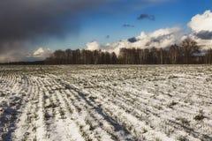 Hermosa vista de un campo nevado con la hierba amarilla contra un fondo del bosque del otoño, cielo azul con las nubes blancas Imagen de archivo