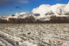 Hermosa vista de un campo nevado con la hierba amarilla contra un fondo del bosque del otoño, cielo azul con las nubes blancas Imagen de archivo libre de regalías