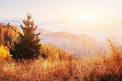 Hermosa vista del bosque en un día soleado Foto de archivo libre de regalías
