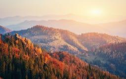 Hermosa vista del bosque en un día soleado Foto de archivo