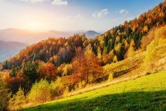 Hermosa vista del bosque en un día soleado Imágenes de archivo libres de regalías