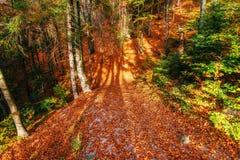 Hermosa vista del bosque en un día soleado Fotos de archivo