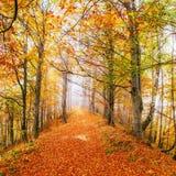 Hermosa vista del bosque en un día soleado Autumn Landscape cárpatos ucrania Foto de archivo libre de regalías