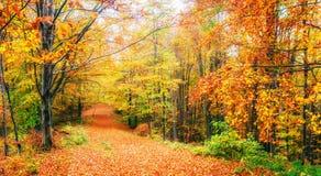 Hermosa vista del bosque en un día soleado Autumn Landscape cárpatos ucrania Fotos de archivo libres de regalías