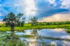 Hermosa vista del campo del arroz La hermosa vista del campo del arroz y el cielo azul se nublan Fotos de archivo