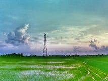 hermosa vista del campo de arroz en una tarde Fotos de archivo