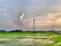 hermosa vista del campo de arroz en una tarde Fotografía de archivo libre de regalías