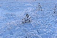 Hermosa vista del invierno de los árboles del pantano debajo de la nieve limpia Fotos de archivo libres de regalías