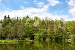 Hermosa vista del lago en verano del bosque Foto de archivo libre de regalías