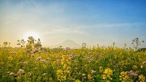 Hermosa vista del monte Fuji y del campo Imagen de archivo