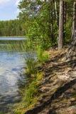 Hermosa vista del paisaje del fondo del lago protegido en bosque del pino Imagen de archivo libre de regalías